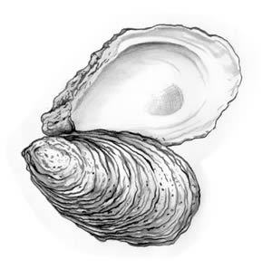cb_american_oyster