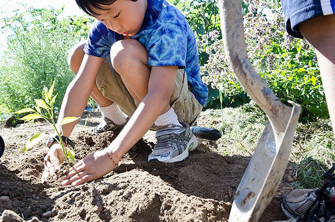 gardening at Great Salt Bay Farm