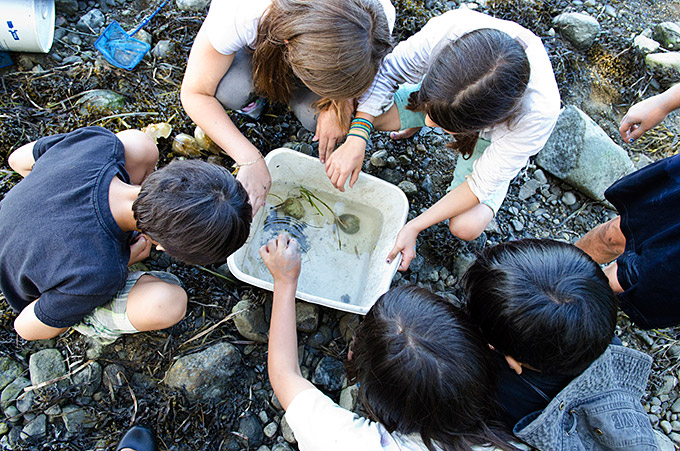 kids looking at critters in a bucket
