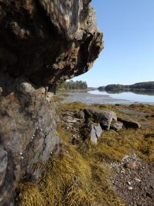 Seal Cove Shore Preserve