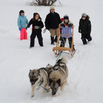 kids dogsledding
