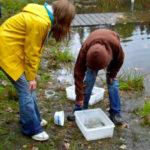 kids collecting specimens