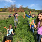 kids harvesting carrots at the farm