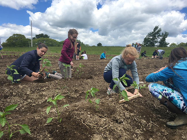 students planting seedlings at the farm