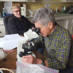 volunteers look into a microscope