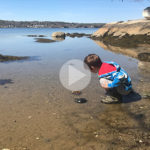 video thumbnail - boy looking at horseshoe crabs