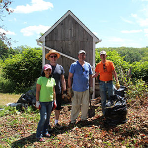 trail tamers cleaning up knotweed at Great Salt Bay Farm