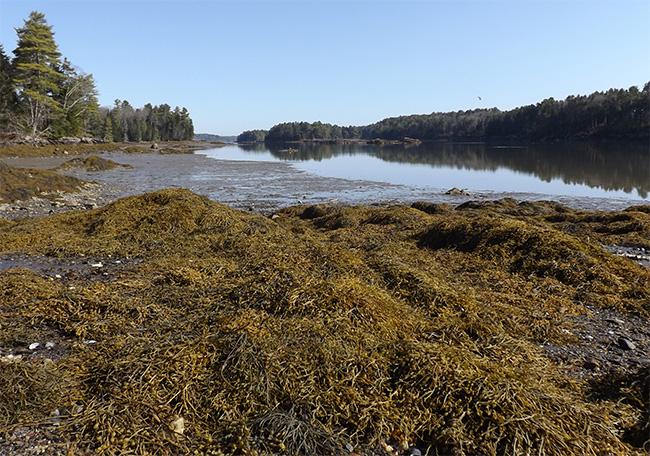 low tide at Seal Cove