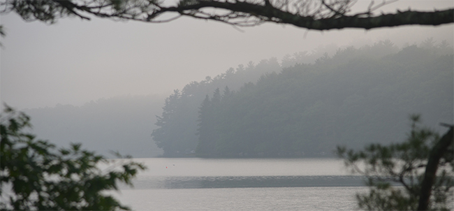 trees and river in the mist in gradated shades of blue