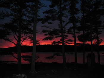 red sunset behind trees