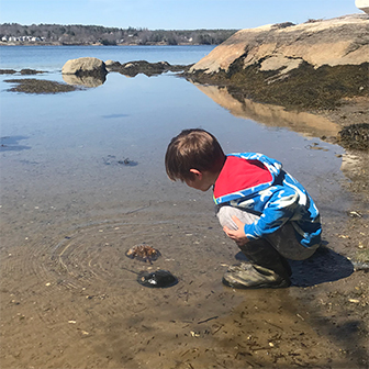 child looking at horseshoe crabs
