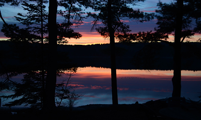 sunset on the river seen through the pines