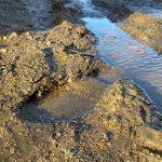 footprint in mud