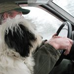 barnaby and dog in the car