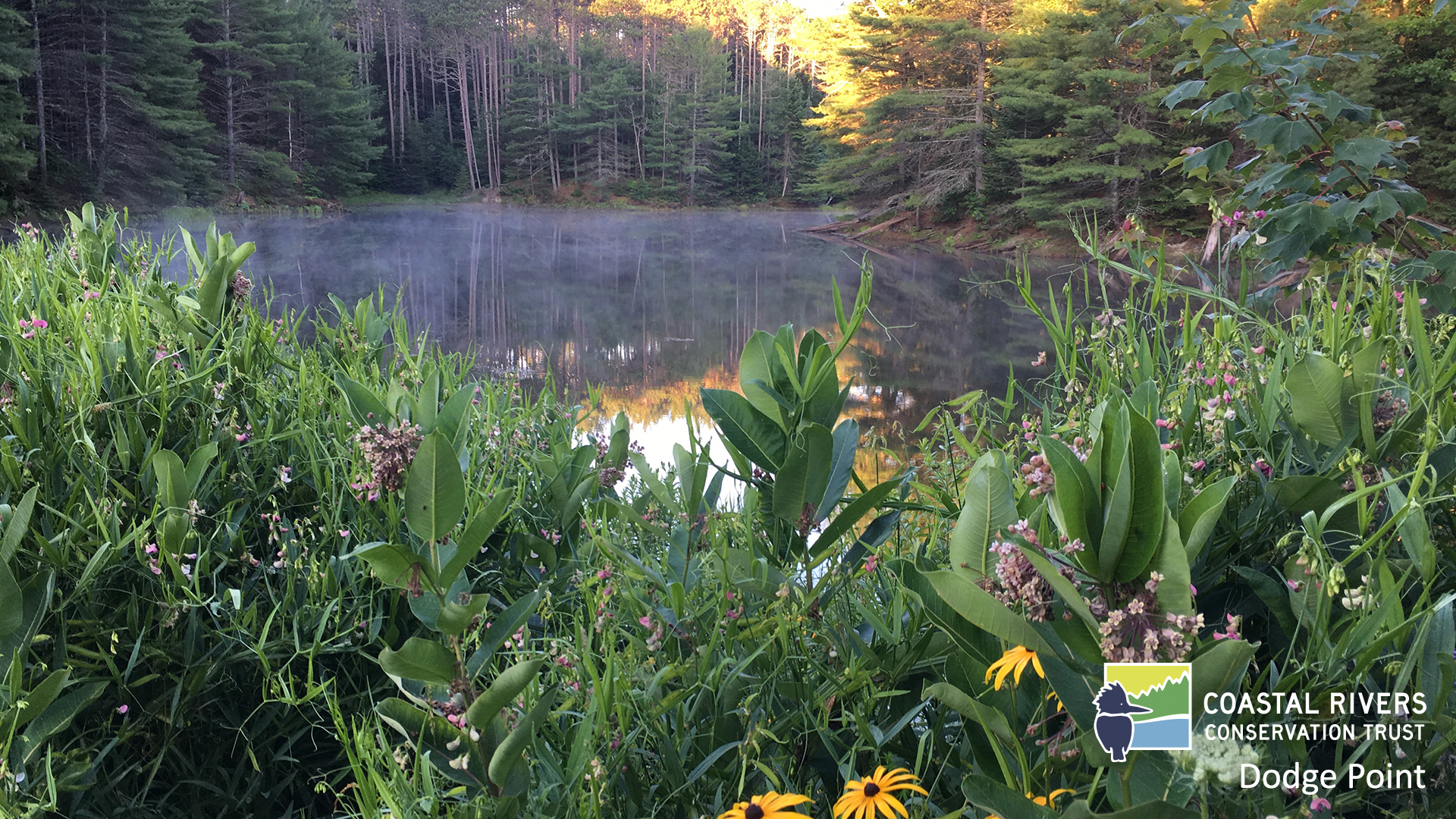 ice pond and flowers at Dodge Point