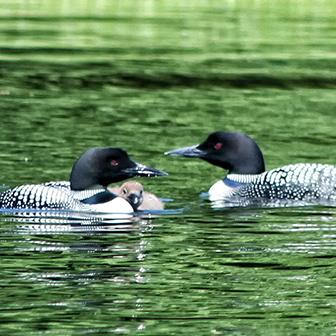 Virtual Ponders Gathering – with Tracy Hart of Maine Audubon