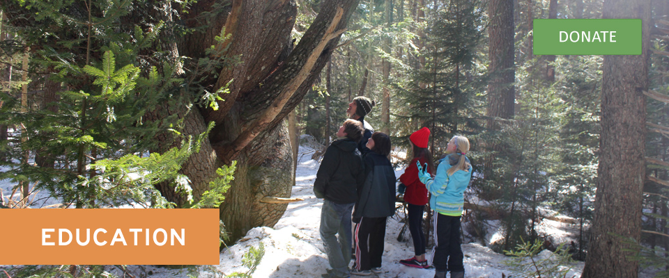 Teacher and students gazing at giant white pine tree