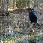 Aram Calhoun wading in a vernal pool