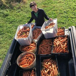 Farmer Sara with bins of carrots